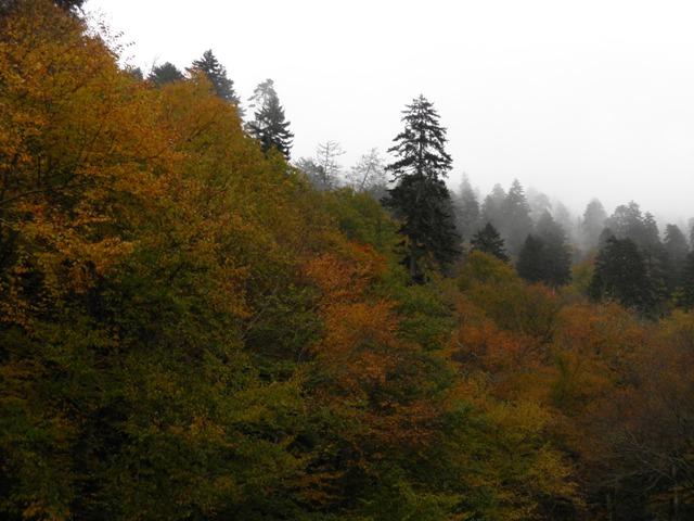 Fall Colors GSMNP