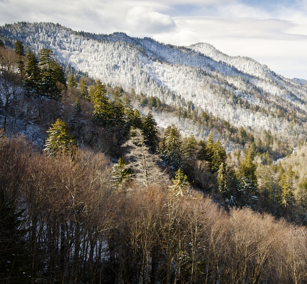 Wilderness Wildlife Week in Smoky Mountains