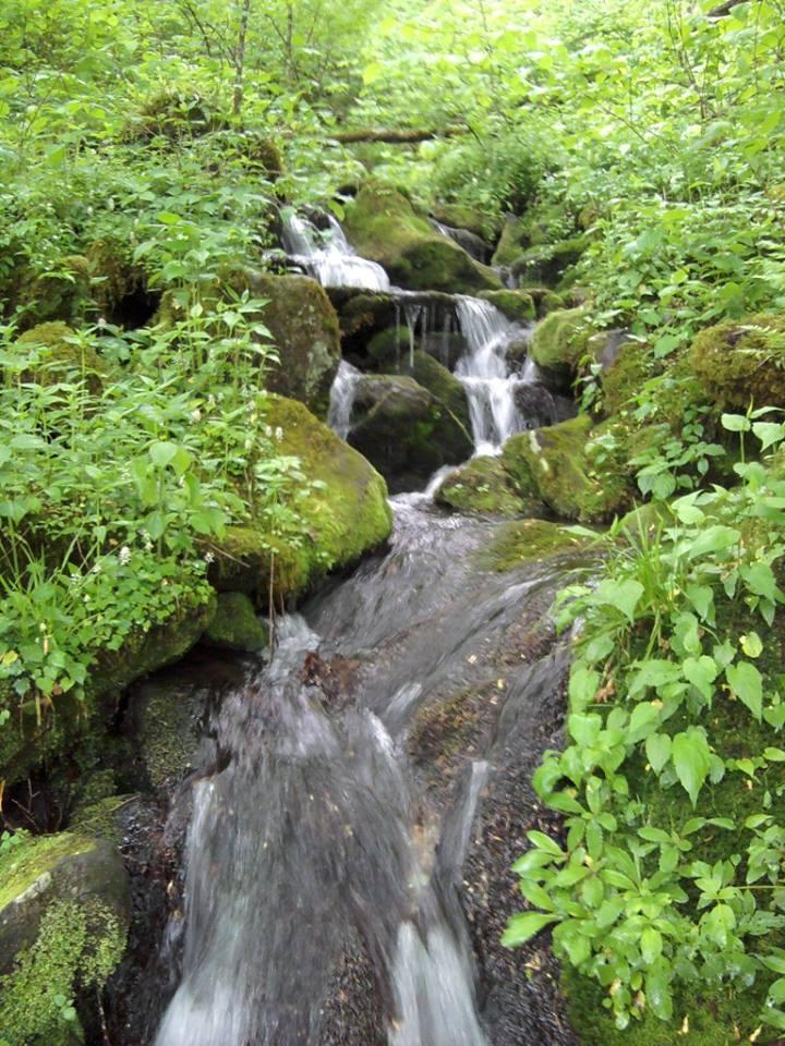 Smokies Blog Creek on Roaring Fork 4-16-2014