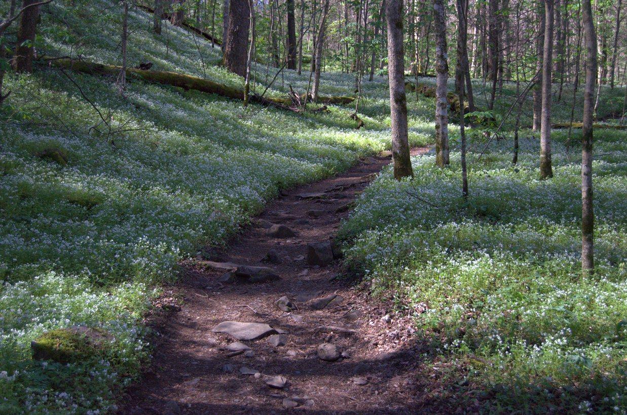 Wildflower Report Porters Creek trail 4-11-14