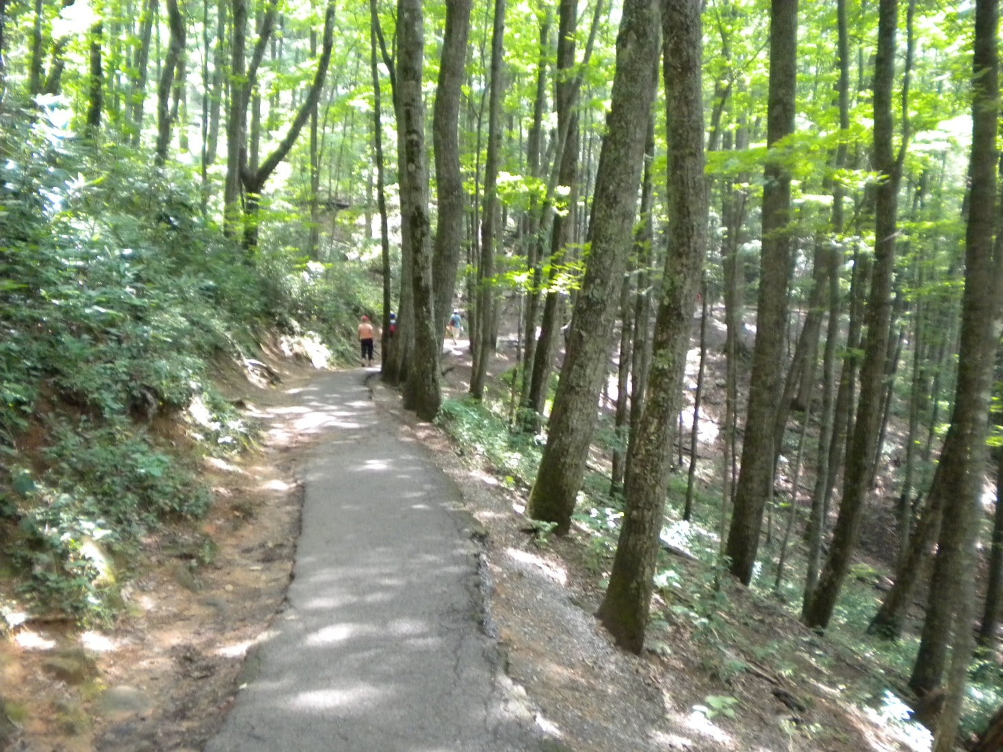 6-3-2014 Laurel Falls Hike – Tree Lined Trail