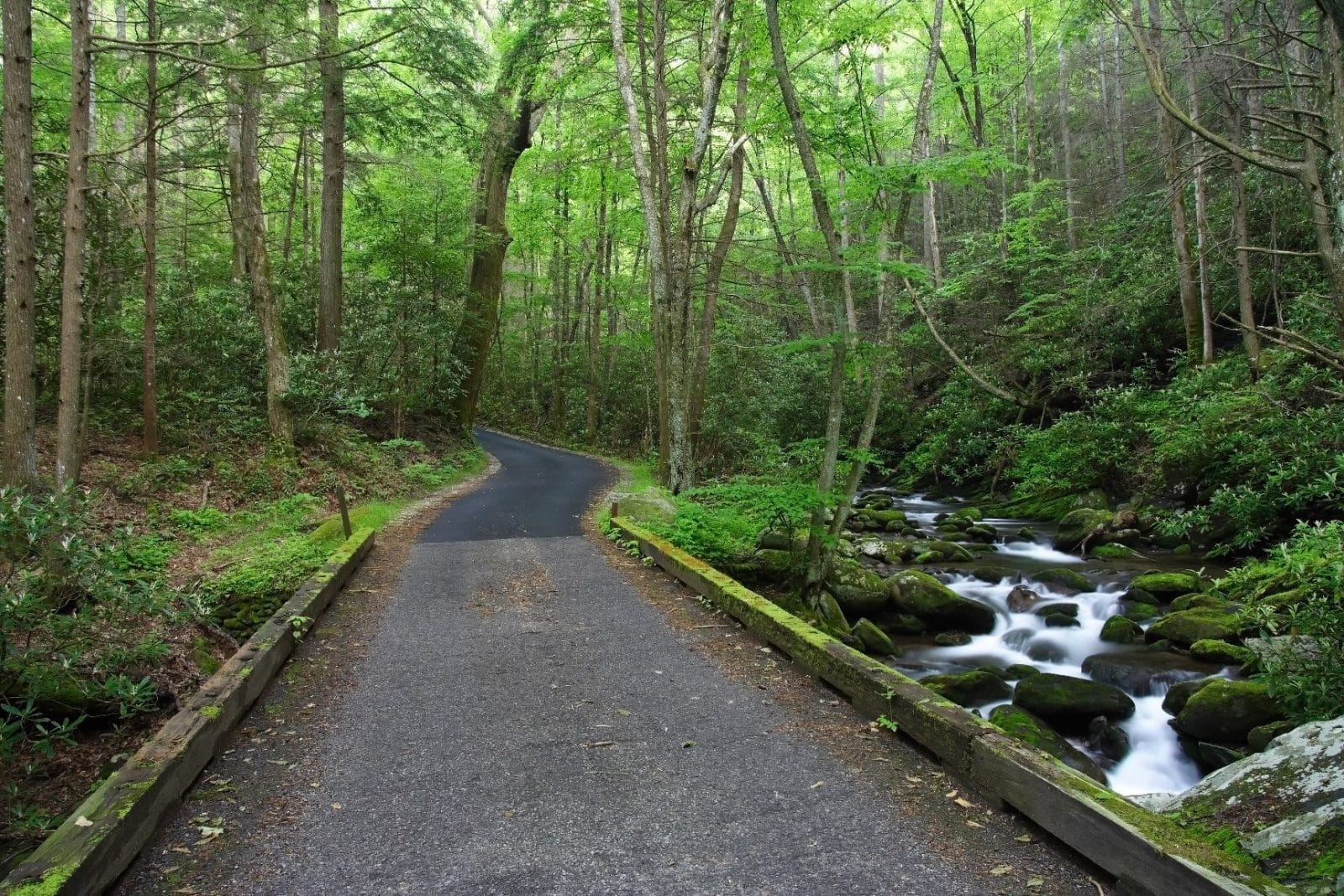 Spring hiking in the smokies for Motor trails in gatlinburg tn