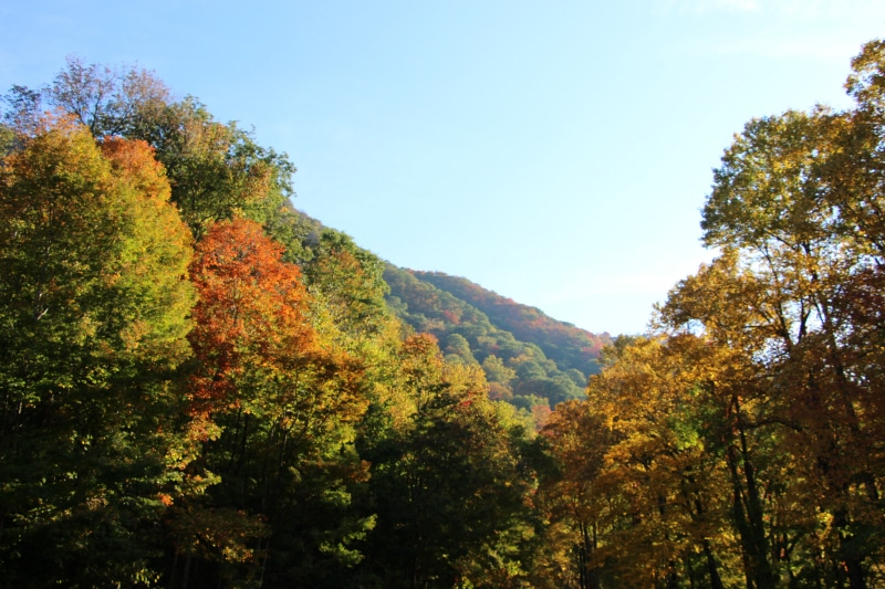 Fall Foliage in Pigeon Forge