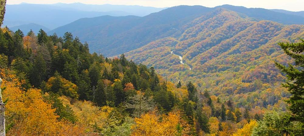 Smoky Mountains Fall Color Foliage Pigeon Forge Tn