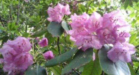 Smoky Mountain Plants And Foliage Pigeon Forge Tn
