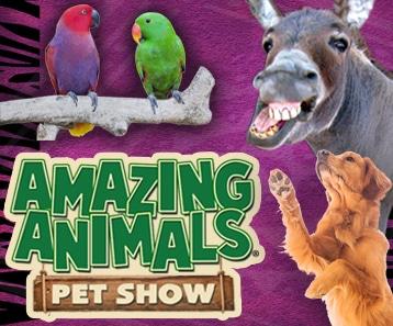 Amazing Animals LISTING IMAGE