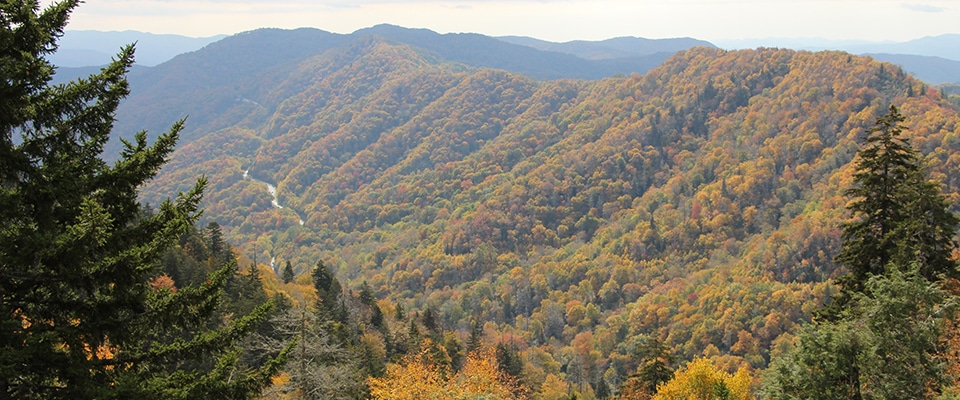 Temperature In Pigeon Forge Tennessee >> Smoky Mountains Foliage - Pigeon Forge, TN