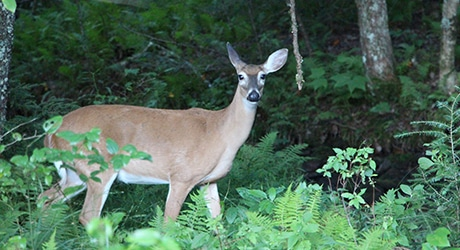 PF_SmokyMTNS_Tier2_InsetImages_460x250_0002s_0001_IMG_7104