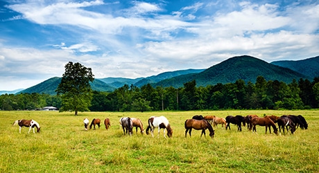 PF_SmokyMTNS_Tier2_InsetImages_460x250_0008s_0000_shutterstock_286585499