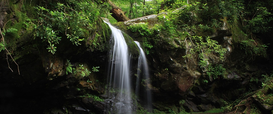 Grotto Falls - Waterfall Hike in Great Smoky Mountains National Park