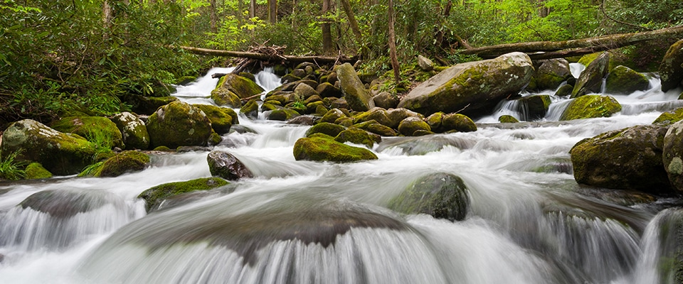 Roaring Fork Motor Nature Trail Scenic Drives In The