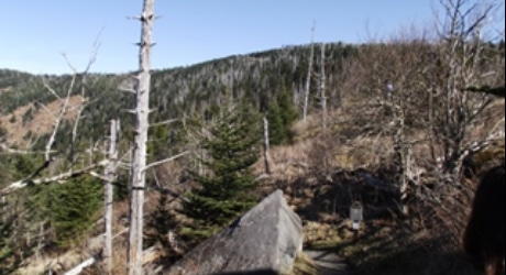 PF_SmokyMTNS_Tier3_InsetImages_460x250_0020s_0000_Andrews Bald