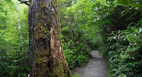 PF_SmokyMTNS_Tier3_InsetImages_460x250_0021s_0001_shutterstock_81417034