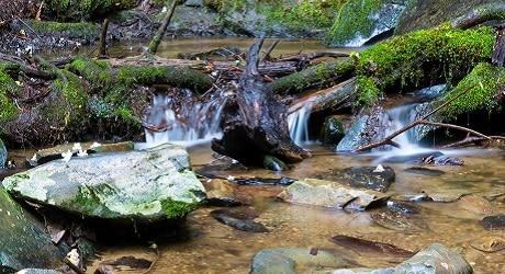 Baskins Creek Falls