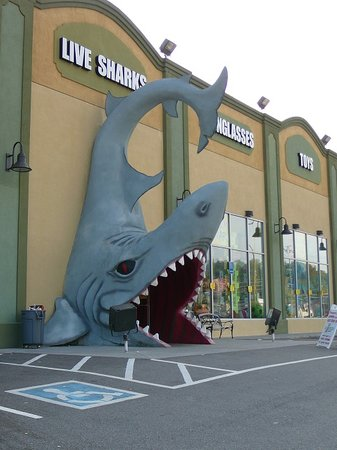 jaws pigeon forge tennessee store. Black Bedroom Furniture Sets. Home Design Ideas