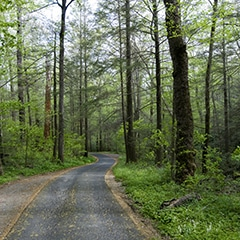 Roaring Fork Motor Nature Trail in Smoky Mountains