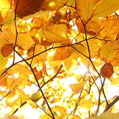 sm-foliage-fall