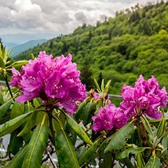 sm-foliage-spring-summer