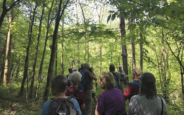 Guided Hikes in Smoky Mountains - Wilderness Wildlife Week in Pigeon Forge TN