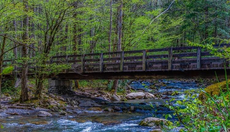 along-drive-to-porters-creek-trail-smoky-mountains-750×430