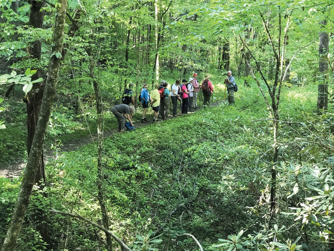 Guided Hikes During Wilderness Wildlife Week in Pigeon Forge TN