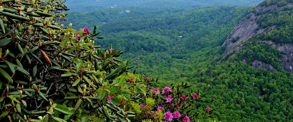 Chimney Tops Trail overlooking Rock Mountain