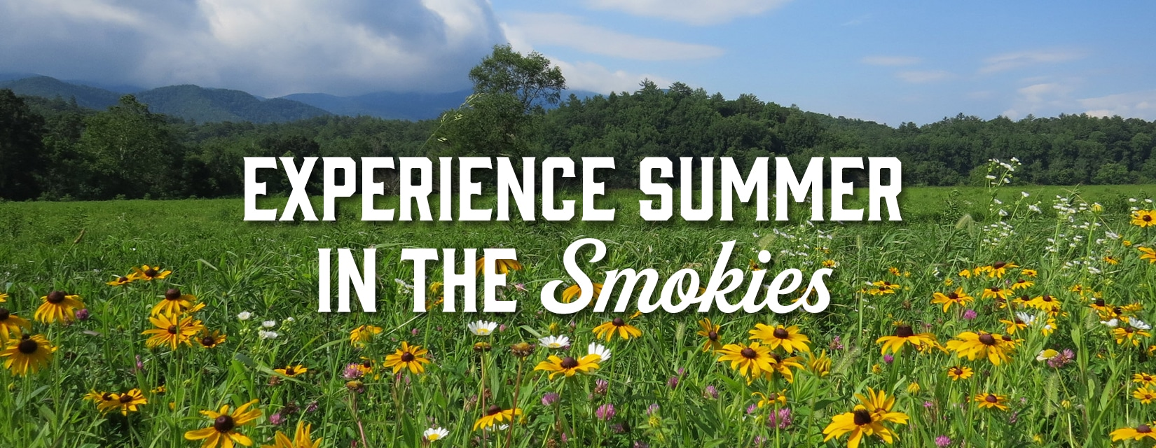 Pigeon Forge Summer Flowers