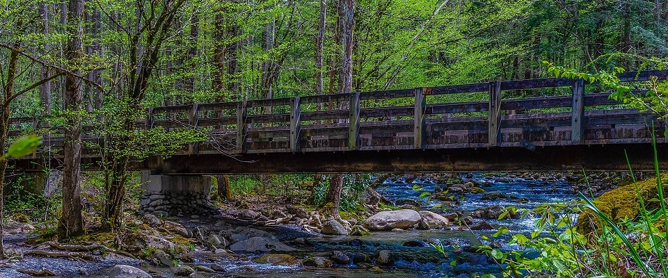 Along drive to Porter's Creek Trail in Great Smoky Mountains National Park