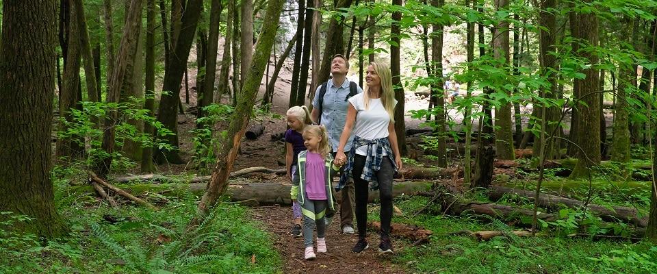 Smoky Mountains Hiking Trails