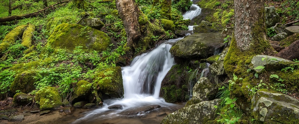 Waterfall on Upper Tremont Road in Great Smoky Mountains National Park