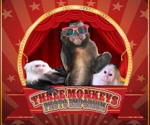 Three Monkeys Photo Emporium